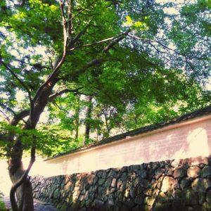 玄賓(げんぴん)庵の塀 桜井市