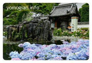 久安寺 kyuuannji 紫陽花の写真
