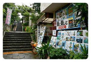 貝の博物館