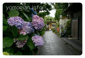 雨で路地の紫陽花