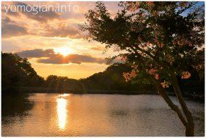池に沈む夕日