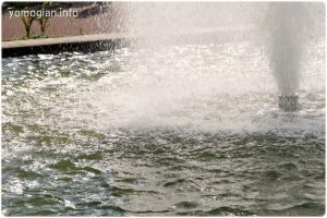 京都府立植物園の写真 噴水