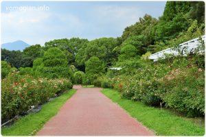 京都府立植物園の写真 バラ