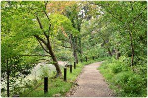 池の脇にある小道