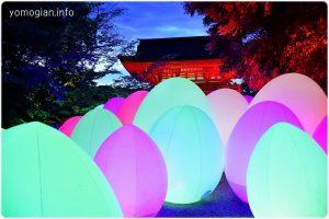 下鴨神社 糺の森の光の祭の写真|2019