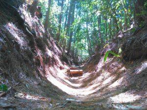 高野山へ行き自然の中を2時間ほど歩きました