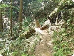 高野山、不動坂、弁天嶽ハイキング(102)