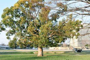 難波宮跡公園の写真