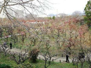 大阪城の梅林と難波宮跡公園の写真