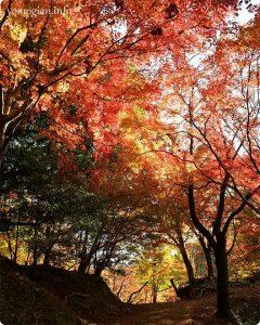 延命寺の紅葉の写真
