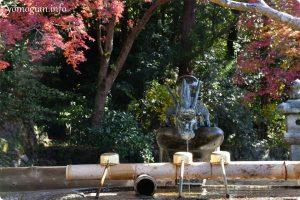 観心寺の紅葉の写真