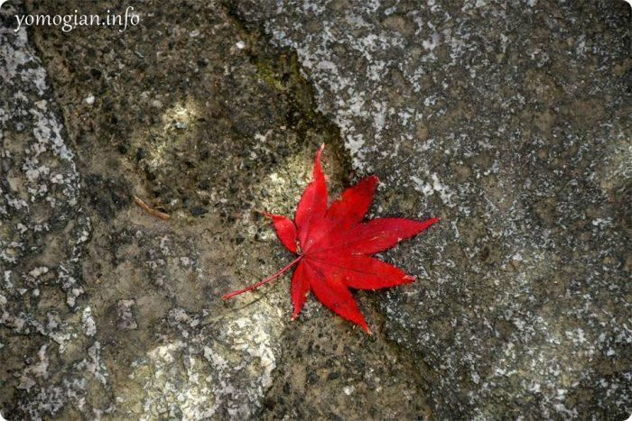 赤い紅葉が一枚