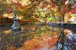 延命寺(河内長野市)の写真です。池にモミジ