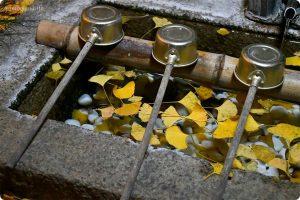 丹生酒殿神社の手水社にイチョウ