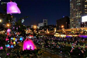 OSAKA光のルネサンス2019の写真 バラ