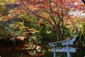 延命寺へ紅葉を求めて|2019