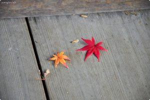 和歌山の西之丸庭園(紅葉渓庭園)の紅葉写真、画像