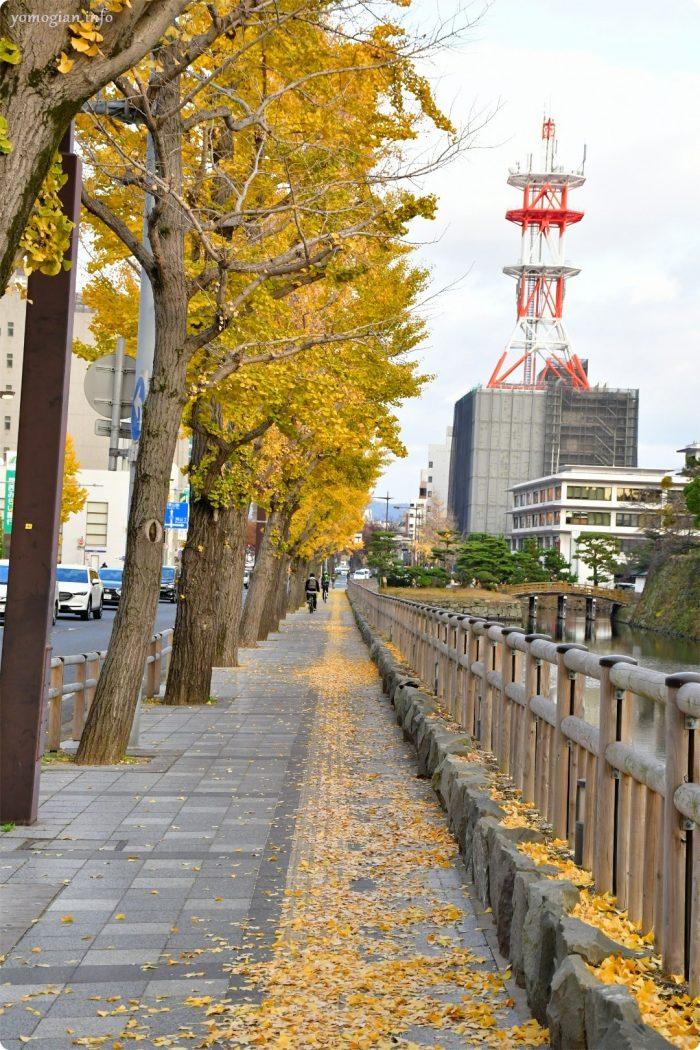 イチョウ通り 和歌山