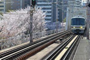 大阪城 桜 写真
