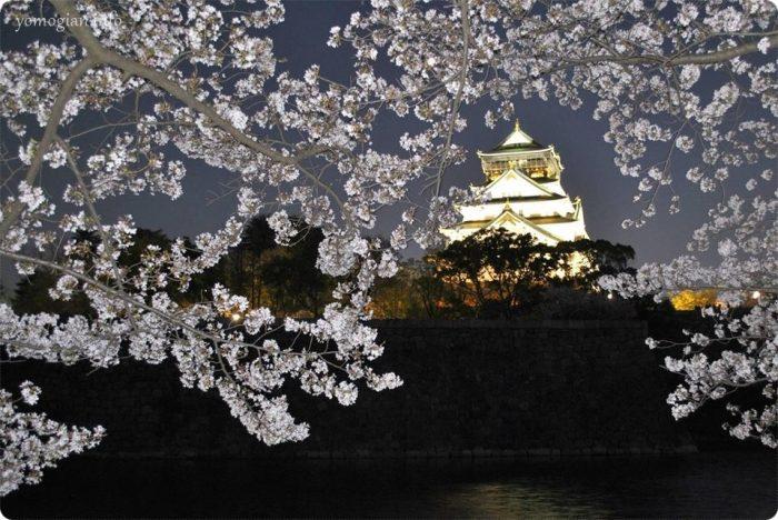 大阪城 桜 写真 夜