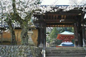 慈尊院 丹生官省符神社  勝利寺 桜