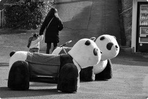 みさき公園の写真 パンダの乗り物