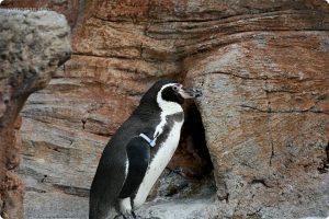 みさき公園の写真 ペンギン