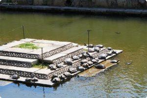 四天王寺の写真