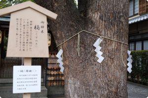 樹齢が300年の楠の御神木