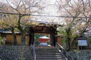 慈尊院(じそんいん)の桜の写真