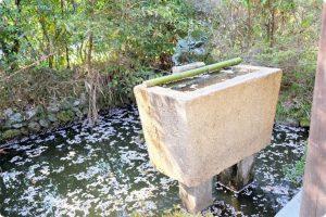 丹生官省符神社(にうかんしょうふじんじゃ)の桜の写真