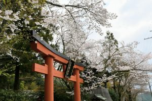 春の高鴨神社の写真 奈良県御所市