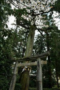 高鴨神社の写真 奈良県御所市