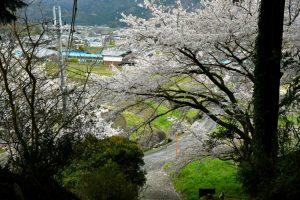 八幡神社(伏見八幡神社)