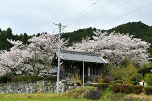 伏見山菩提寺の桜の写真