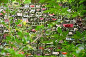 九本寺の彼岸花