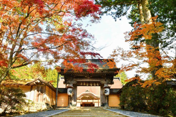 高野山の紅葉 もみじ 金剛峯寺