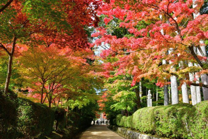 高野山の紅葉 もみじ 蛇腹道