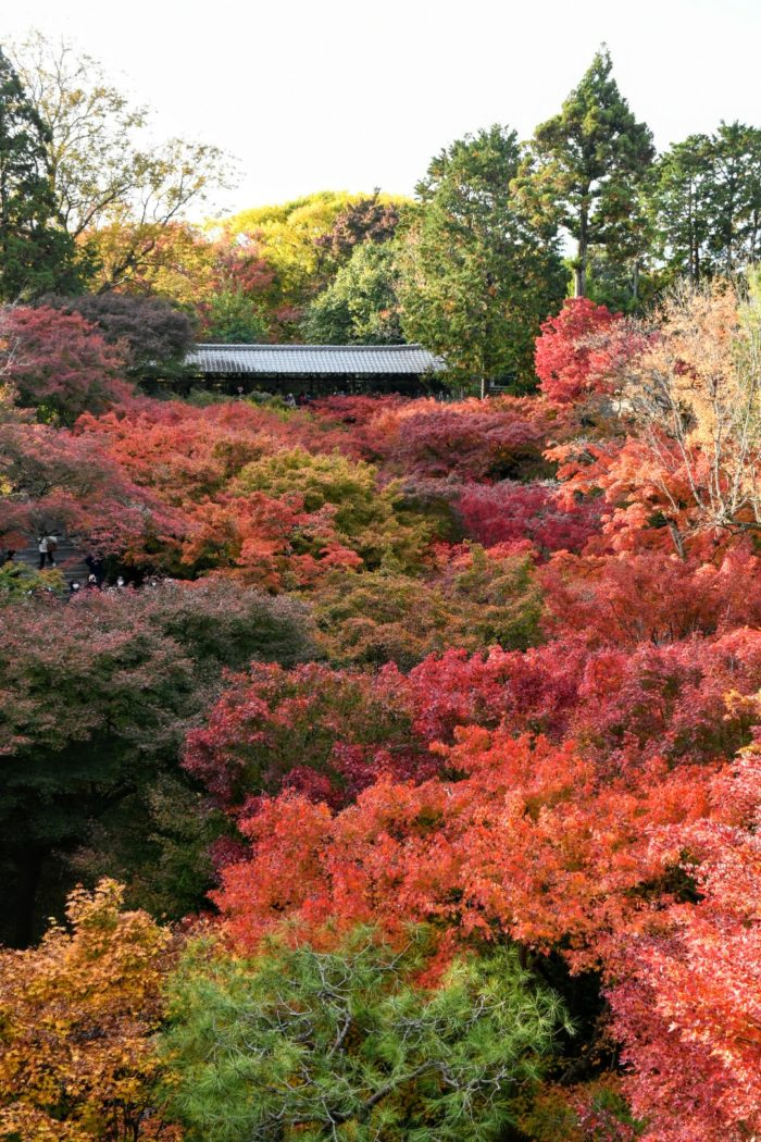 東福寺 紅葉 写真