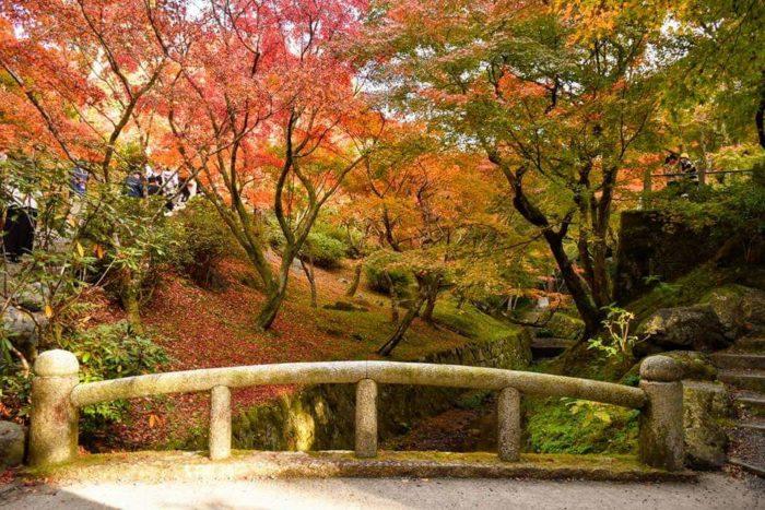 東福寺 紅葉写真