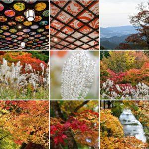 高野山の紅葉の写真