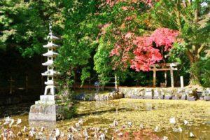 延命寺の河内長野市 写真 鳥居