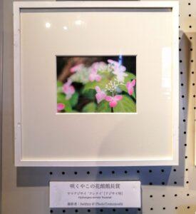 咲くやフォトコンテスト2020年 館長賞