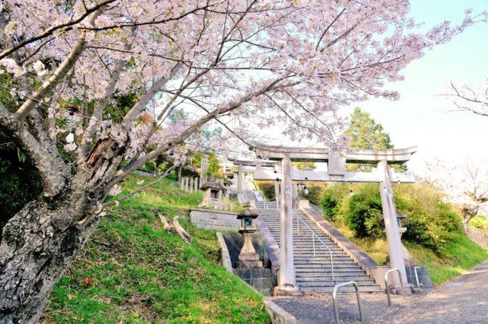 高野口公園 桜