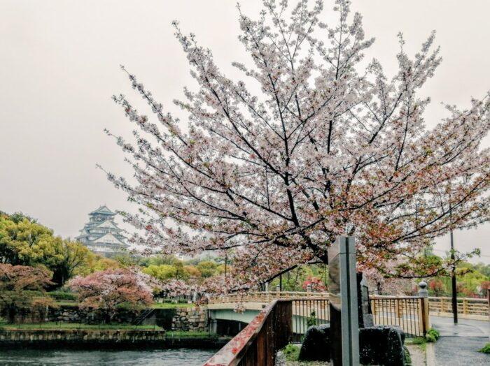 雨の大阪城の写真 画像