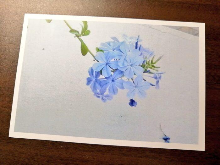 ルリマツリ 写真 ポストカード